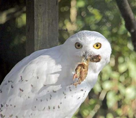 Mildly Disturbing Pictures of Animals Eating Other Animals